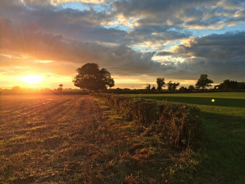 field-hedge-tree-sky-sunset